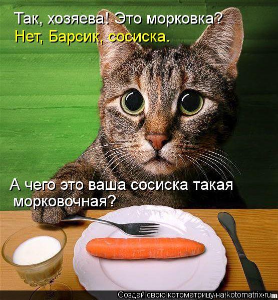 Котоматрица: Так, хозяева! Это морковка? Нет, Барсик, сосиска. А чего это ваша сосиска такая морковочная?