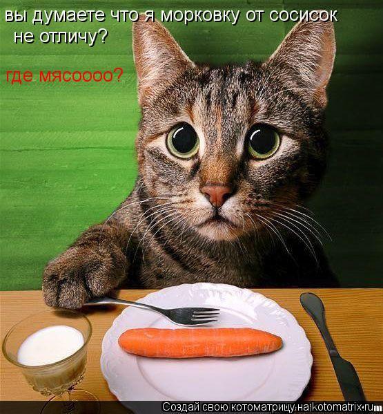 Котоматрица: вы думаете что я морковку от сосисок  не отличу? где мясоооо?