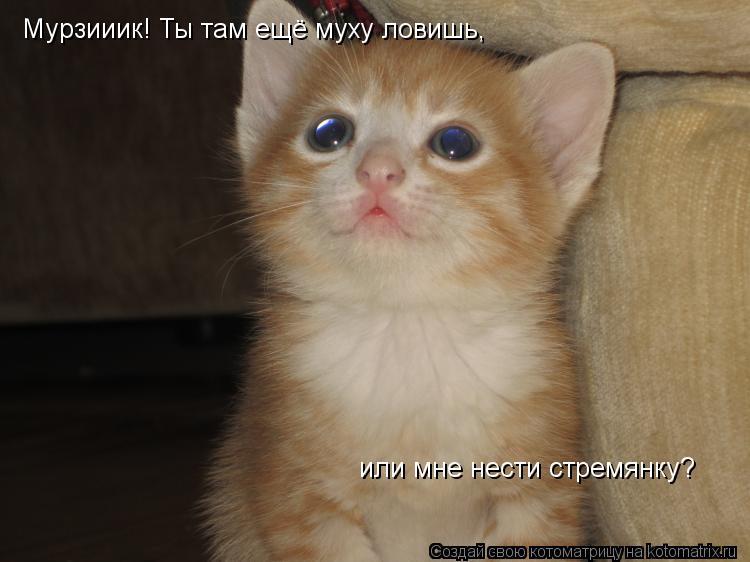 Котоматрица: Мурзииик! Ты там ещё муху ловишь,  или мне нести стремянку?