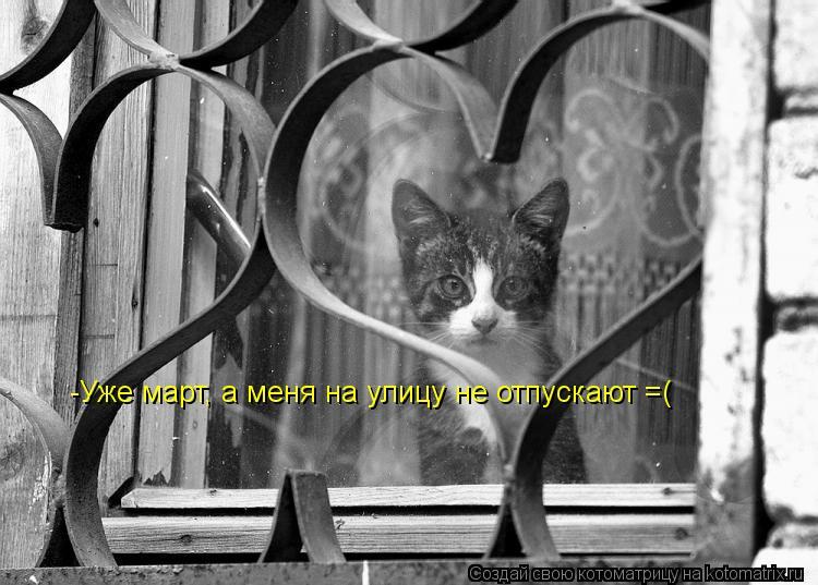 Котоматрица: -Уже март, а меня на улицу не отпускают =(