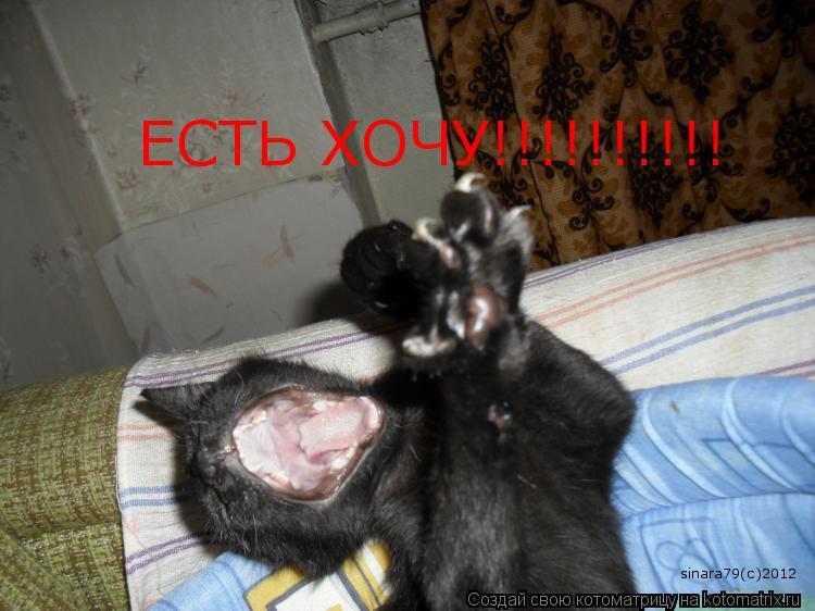 Котоматрица: ЕСТЬ ХОЧУ!!!!!!!!!! sinara79(c)2012