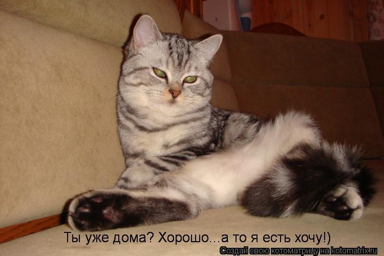 Котоматрица: Ты уже дома? Хорошо...а то я есть хочу!) Ты уже дома? Хорошо...а то я есть хочу!)