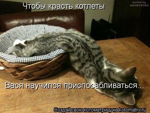 Котоматрица: Вася научился приспосабливаться... Чтобы красть котлеты
