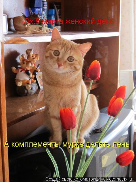 Котоматрица: А комплементы мурке делать лень -Эх 8 марта женский день