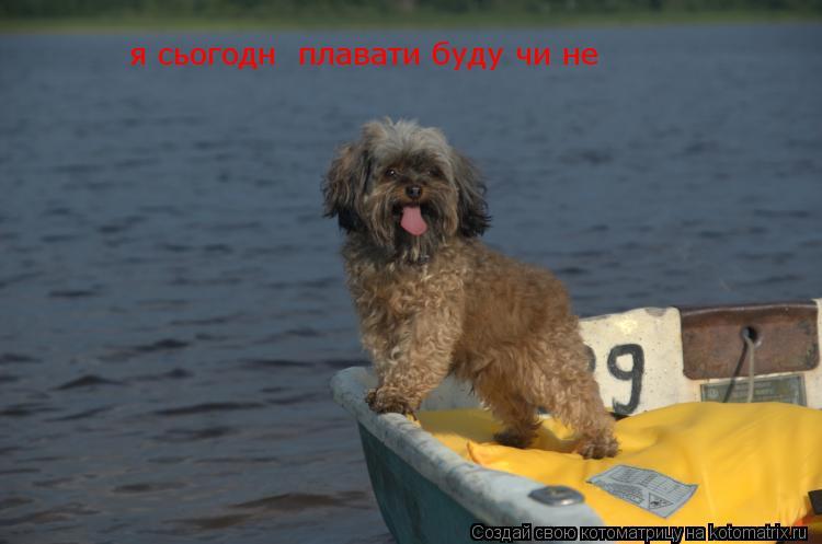 Котоматрица: я сьогодні плавати буду чи не