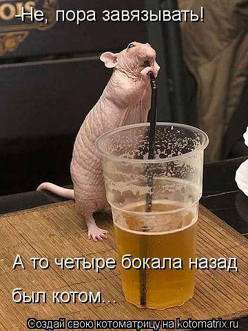 Котоматрица: -Не, пора завязывать!  А то четыре бокала назад  был котом...
