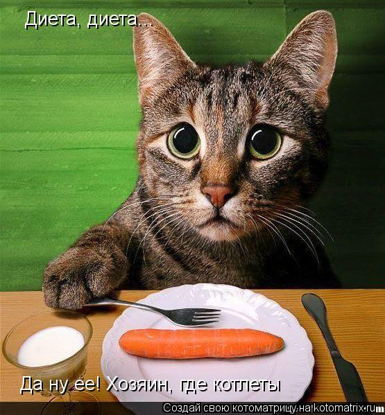 Котоматрица: Диета, диета... Да ну ее! Хозяин, где котлеты
