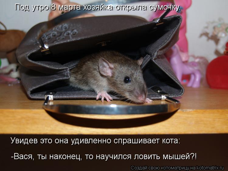 Котоматрица: Под утро 8 марта хозяйка открыла сумочку. Увидев это она удивленно спрашивает кота: -Вася, ты наконец, то научился ловить мышей?!