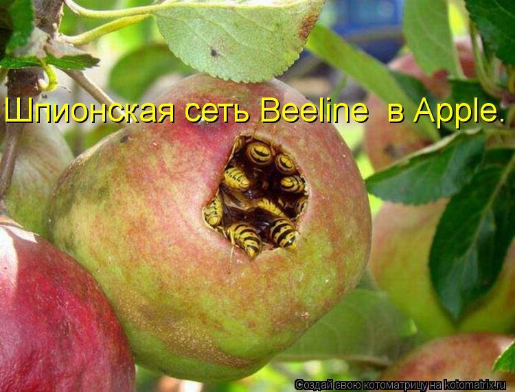 Котоматрица - Шпионская сеть Beeline  в Аpple.