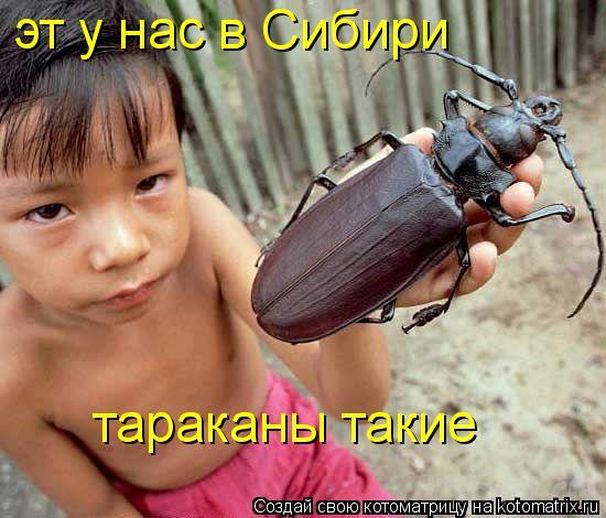 Котоматрица: эт у нас в Сибири  тараканы такие