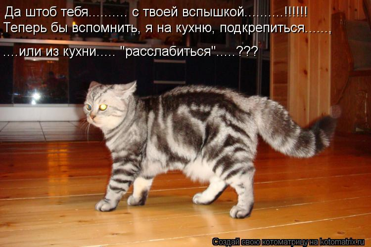 """Котоматрица: Да штоб тебя.......... с твоей вспышкой..........!!!!!! Теперь бы вспомнить, я на кухню, подкрепиться......, ....или из кухни..... """"расслабиться""""....."""
