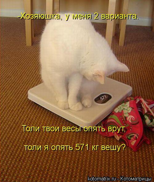 Котоматрица: 571 -Хозяюшка, у меня 2 варианта. Толи твои весы опять врут, толи я опять 571 кг вешу?