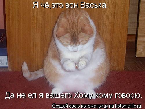 Котоматрица: Я чё,это вон Васька. Да не ел я вашего Хому кому говорю.