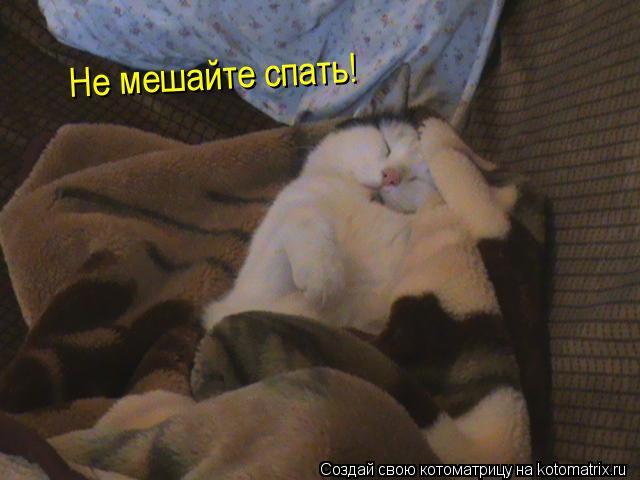 Котоматрица: Не мешайте спать!