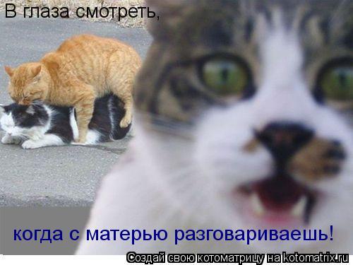 Котоматрица: В глаза смотреть ,ко В глаза смотреть, когда с матерью разговариваешь!