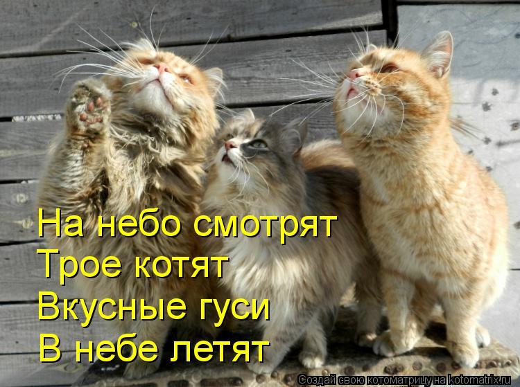 Котоматрица: На небо смотрят  Трое котят Вкусные гуси В небе летят