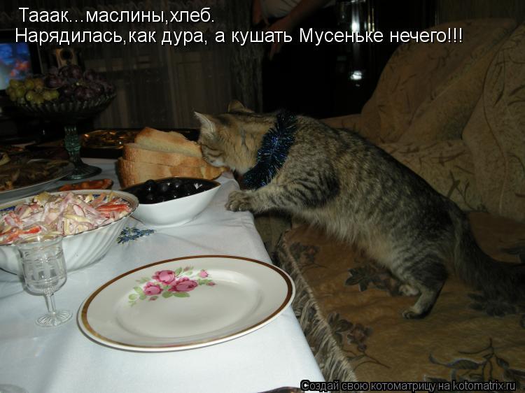 Котоматрица: Тааак...маслины,хлеб.  Нарядилась,как дура, а кушать Мусеньке нечего!!!