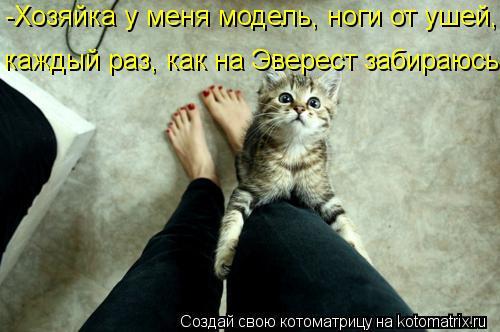 Котоматрица: -Хозяйка у меня модель, ноги от ушей, каждый раз, как на Эверест забираюсь!!