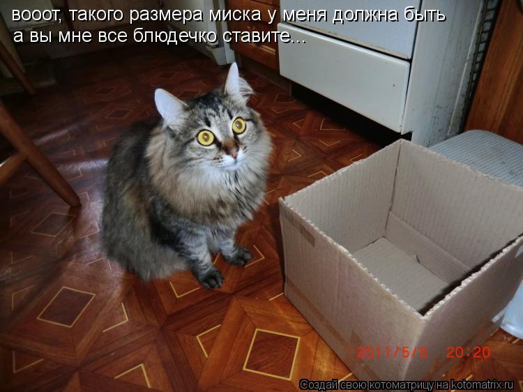 Котоматрица: вооот, такого размера миска у меня должна быть а вы мне все блюдечко ставите...