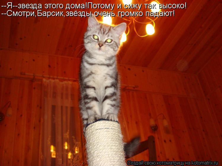 Котоматрица: --Я--звезда этого дома!Потому и сижу так высоко! --Смотри,Барсик,звёзды очень громко падают!