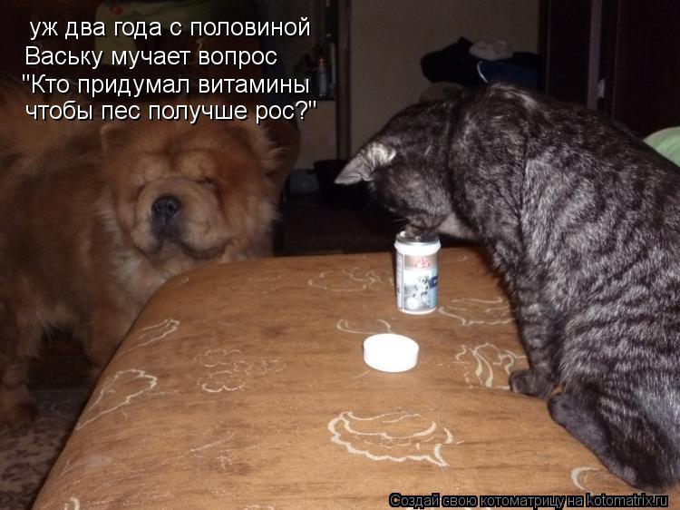 """Котоматрица: уж два года с половиной Ваську мучает вопрос """"Кто придумал витамины чтобы пес получше рос?"""""""