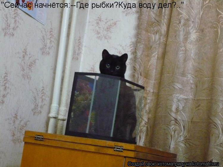"Котоматрица: ""Сейчас начнётся:--Где рыбки?Куда воду дел?.."""