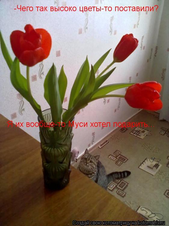 Котоматрица: -Чего так высоко цветы-то поставили? Я их вообще-то Муси хотел подарить...