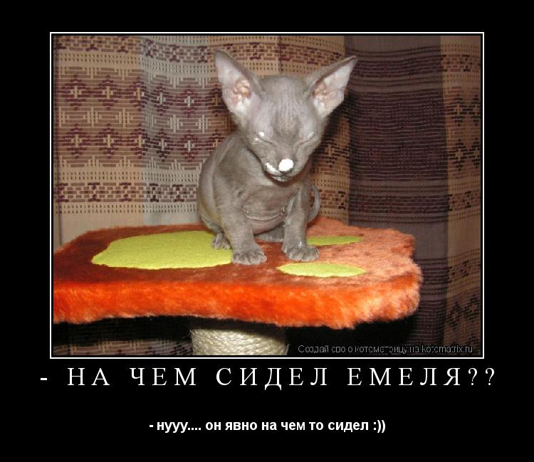 Котоматрица: - на чем сидел Емеля?? - нууу.... он явно на чем то сидел :))