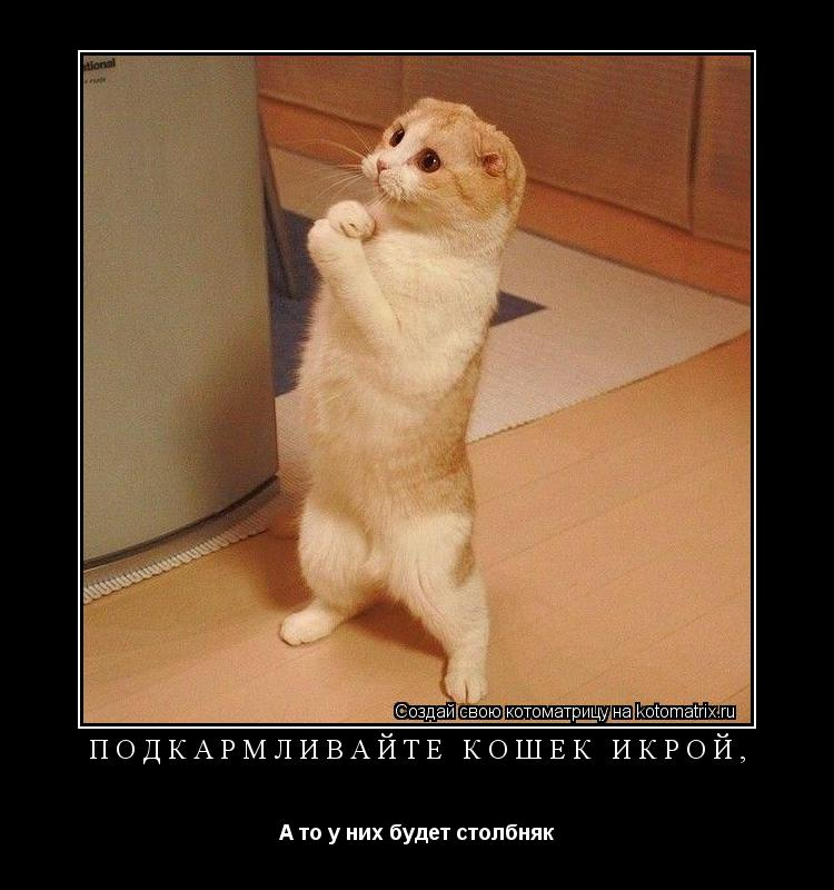 Котоматрица: Подкармливайте кошек икрой, А то у них будет столбняк