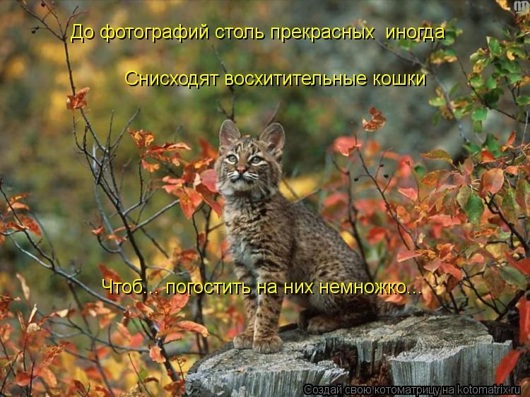 Котоматрица: До фотографий столь прекрасных  иногда Снисходят восхитительные кошки Чтоб... погостить на них немножко...