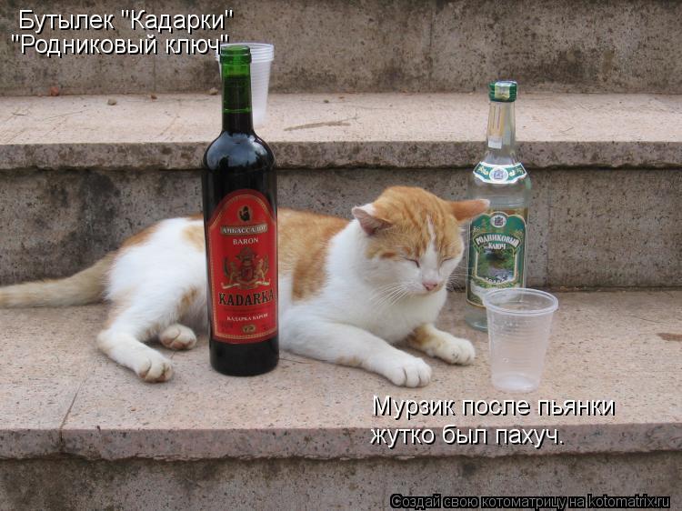 """Котоматрица: Бутылек """"Кадарки"""" """"Родниковый ключ"""" Мурзик после пьянки жутко был пахуч."""