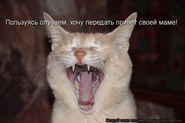 Котоматрица: Пользуясь случаем, хочу передать привет своей маме!