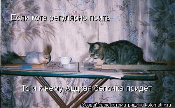 Котоматрица: Если кота регулярно поить То и к нему Аццкая белочка придёт