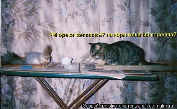 Котоматрица: Чё орехи кончились? на корм кошачий перешла?