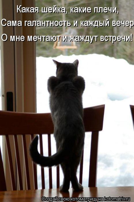 Котоматрица: Какая шейка, какие плечи, Сама галантность и каждый вечер О мне мечтают и жаждут встречи!