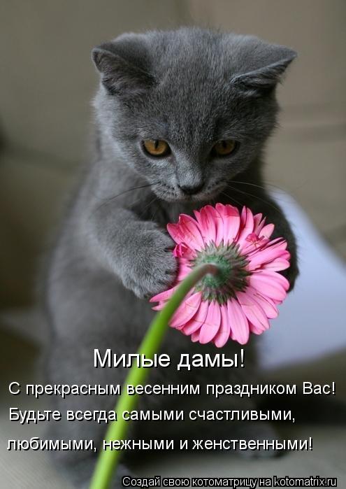 Котоматрица: Милые дамы!  С прекрасным весенним праздником Вас! Будьте всегда самыми счастливыми,  любимыми, нежными и женственными!