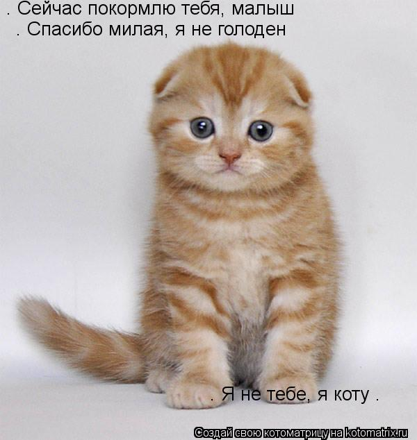 Котоматрица: — Сейчас покормлю тебя, малыш  — Спасибо милая, я не голоден  — Я не тебе, я коту …