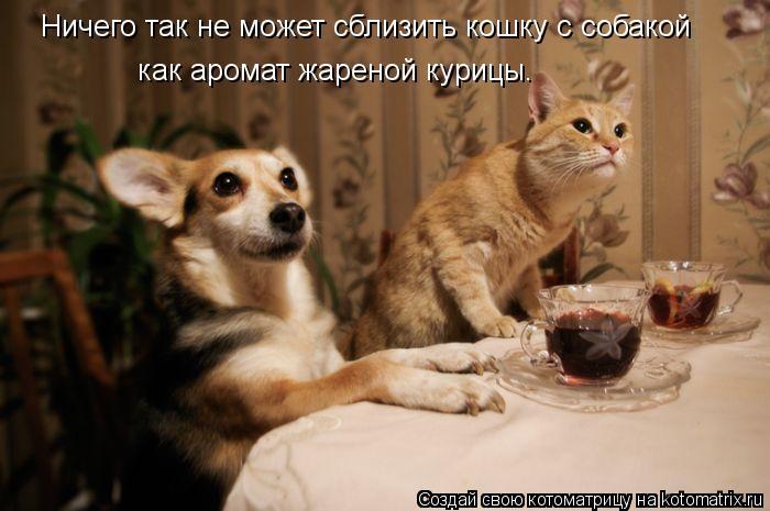 Котоматрица: Ничего так не может сблизить кошку с собакой как аромат жареной курицы.