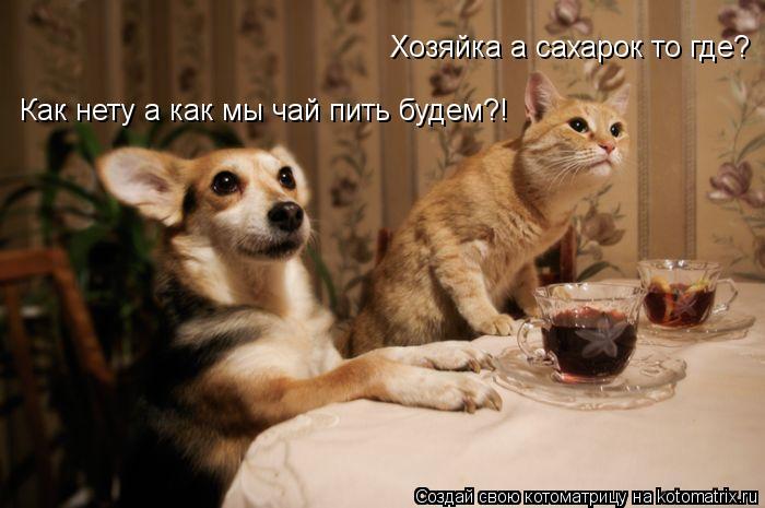 Котоматрица: Как нету а как мы чай пить будем?! Хозяйка а сахарок то где?