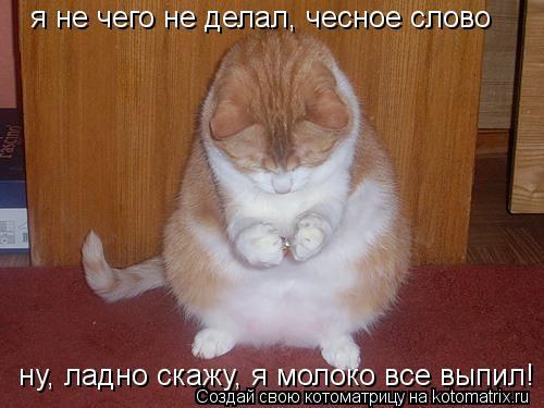 Котоматрица: я не чего не делал, чесное слово ну, ладно скажу, я молоко все выпил!