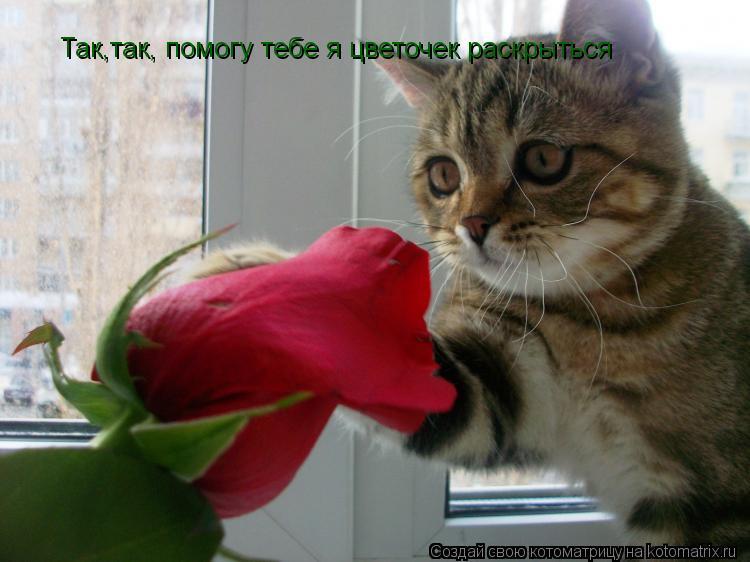 Котоматрица: Так,так, помогу тебе я цветочек раскрыться