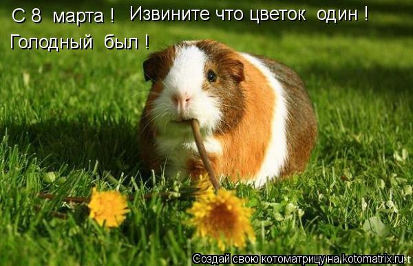 Котоматрица: С 8  марта ! Извините что цветок  один ! Голодный  был !