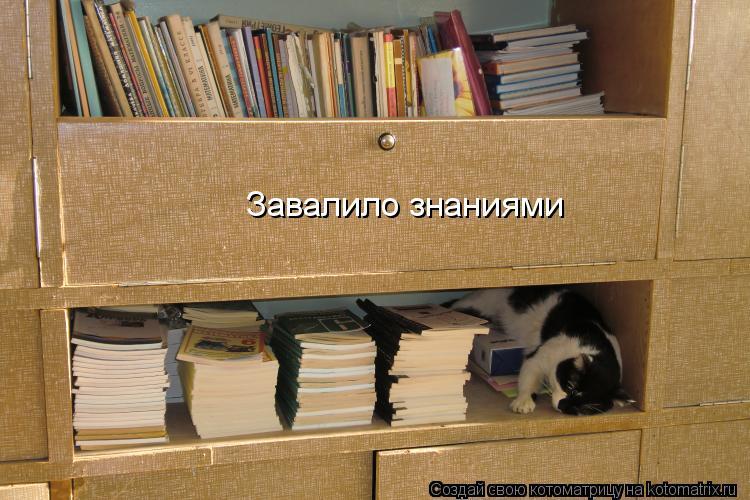 Котоматрица: Завалило знаниями