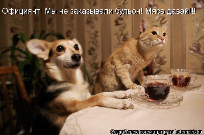 Котоматрица: Официянт! Мы не заказывали бульон! Мяса давай!!!