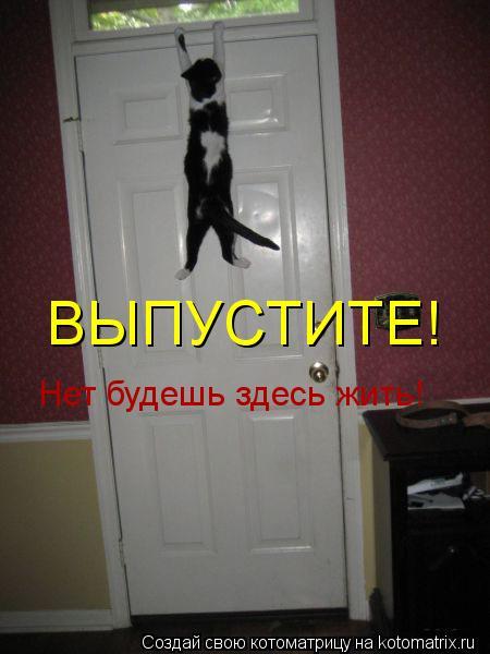Котоматрица: ВЫПУСТИТЕ! Нет будешь здесь жить!