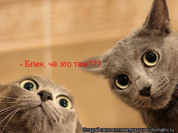 Котоматрица: - Блин, чё это там???