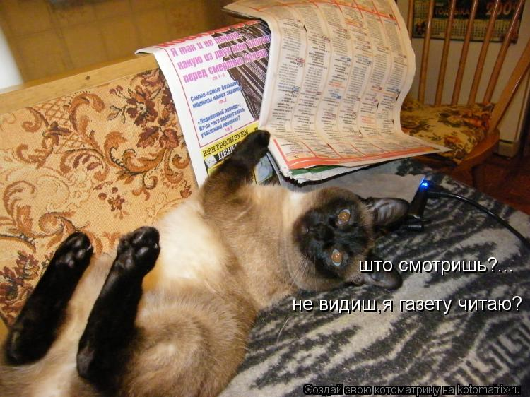 Котоматрица: што смотришь?... не видиш,я газету читаю?