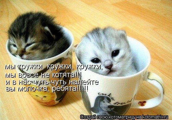 Котоматрица: мы кружки, кружки, кружки, мы вовсе не котята!!! и в нас чуть-чуть налейте вы молочка, ребята!!!!!