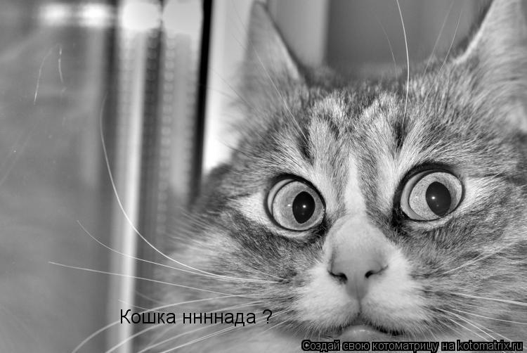 Котоматрица: Кошка ннннада ?