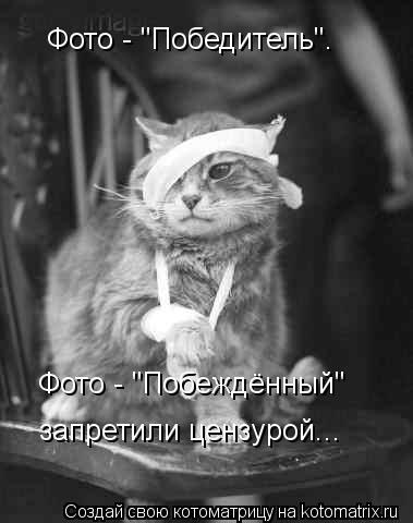 """Котоматрица: Фото - """"Победитель"""". Фото - """"Побеждённый"""" запретили цензурой..."""